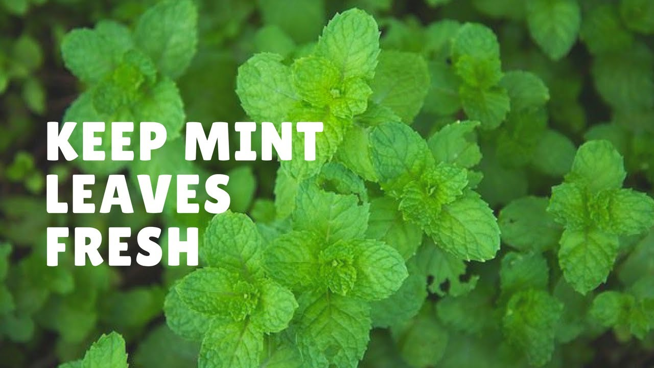 what to use mint leaves for